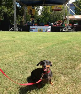Nashville Dog Festival