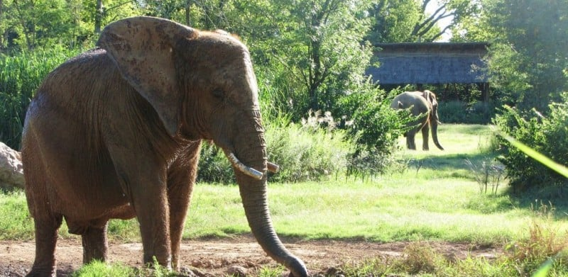 Nashville Zoo